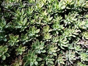 Naturaleza Tropical: Ideas para decorar con plantas suculentas