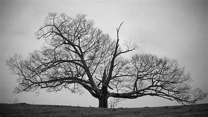 Tree Wallpapers Trees Pixelstalk Nature Fog