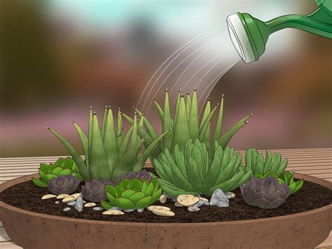 How to Create a Dish Garden: 12 Steps (with Pictures ...