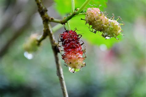 images tree nature branch blossom fruit berry
