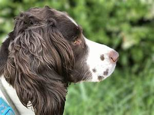 tag dog obedience archives blogblog With residential dog training