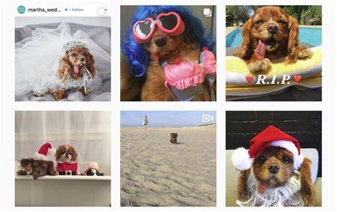 Uz labākiem medību laukiem devusies Instagram zvaigzne ar ...
