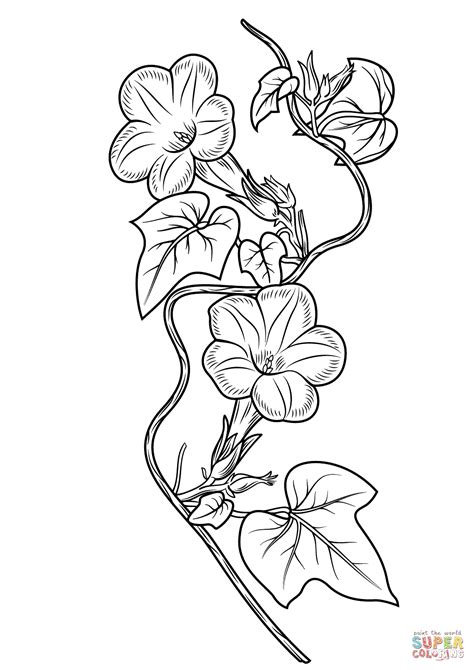 Ivy-leaf Morning Glory coloring page   Free Printable