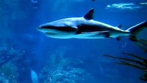 Der weisse Hai Zoo Berlin Aquarium 2012 YouTube