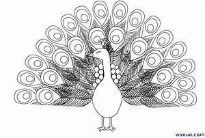 Dessin De Plume Facile : paon coloriage d un paon gratuit imprimer ~ Melissatoandfro.com Idées de Décoration
