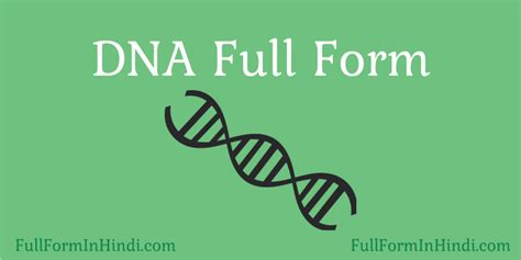 dna full form in hindi dna structure क स ह full