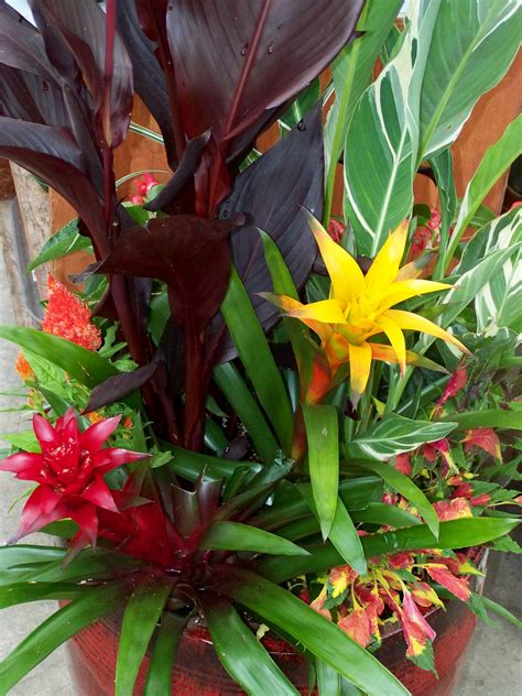 Tropical Plants and Container Gardens