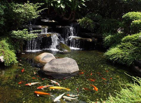 types  fish  garden ponds backyard design ideas