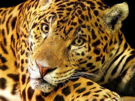 Amazon Rainforest Animals: Types of Endangered Rainforest