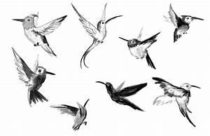 Bird Sketches | Cogito Ergo Sum
