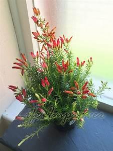 Plante D Extérieur En Pot : plante en pot ext rieur hiver pivoine etc ~ Teatrodelosmanantiales.com Idées de Décoration