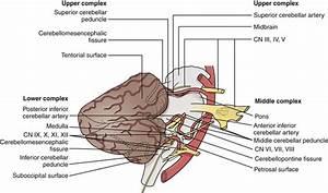 Cerebellopontine Angle Tumors | Neupsy Key