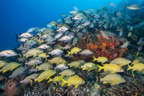fish caribbean reef florida underwater common many swimming identification there guide shapes getty colors