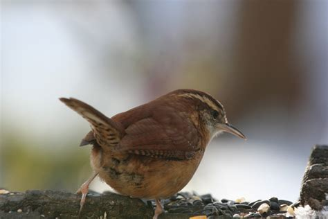 birds pennsylvania magazine
