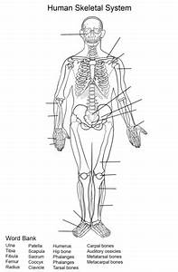 human skeletal system worksheet coloring page free With installationdiagram