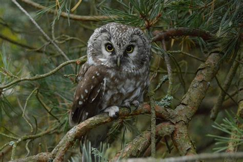 Par putnu kaitīgumu un noderību - Visi putni