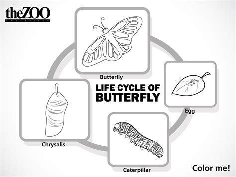 color cycle butterfly cycle coloring sketch coloring page