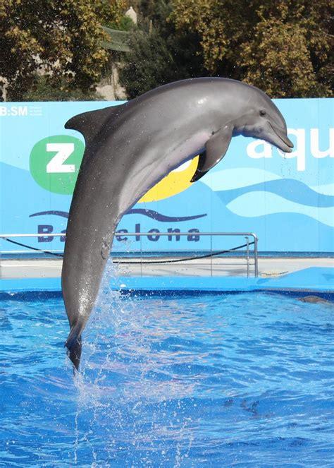 delfin show  im zoo barcelona oktober  martin fisch flickr