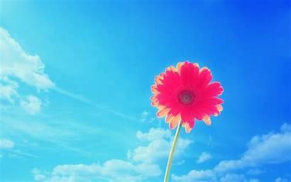 Desktop Flower Backgrounds Flowers Pink Wallpapertag