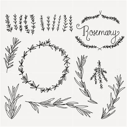 Rosemary Sprig Clip Sprigs Clipart Tattoo Photoshop