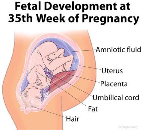perkembangan janin usia 35 minggu