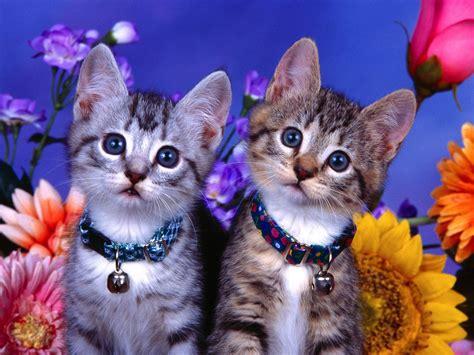 Best Desktop Hd Wallpaper Cat Desktop Wallpapers