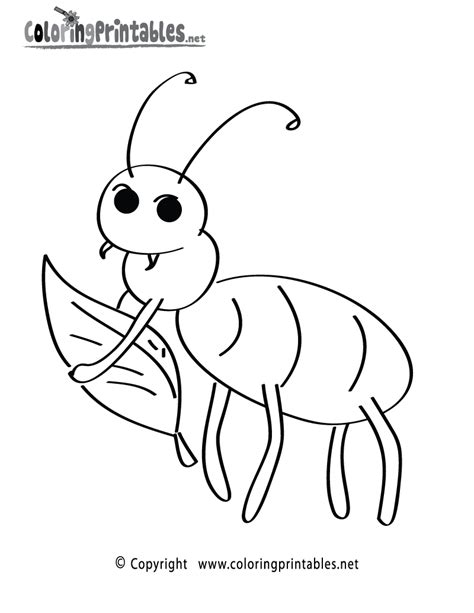 fun insect coloring page   nature coloring printable