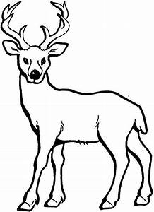 Realistic Whitetail Deer Coloring Reaic Colouring Pages