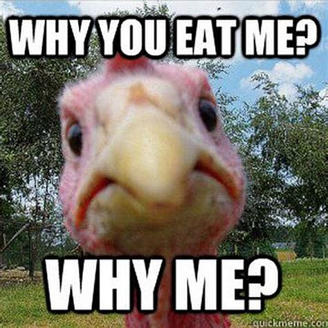 Turkey Meme - the funniest memes for thanksgiving 2012