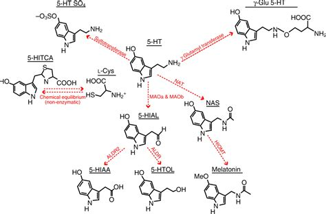 Cytotec Review Image Gallery Serotonin 5 Ht