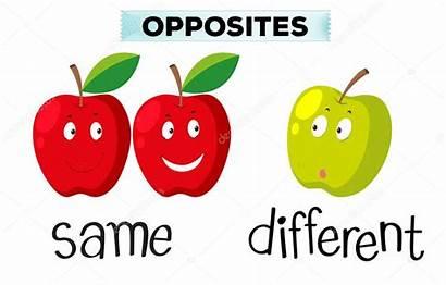Same Different Opposite Words Illustration Cartoon Begin