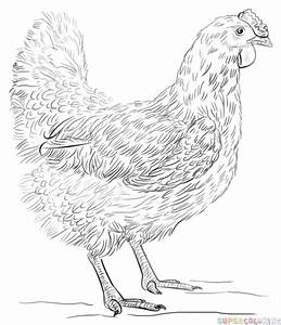 How To Draw A Hen Step By Step Drawing Tutorials For Kids