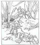 Coloring Pages Nature Ants Fun Around Animal Preschool Books Adult Ant Mieren Kleurplaat Adults Mier Kleurplaten Kleuterdigitaal Spider Insects Patterns sketch template