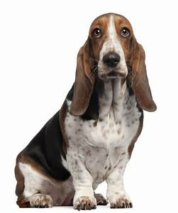 Small Dogs That Bark Less and Make Cute and Quiet Companions