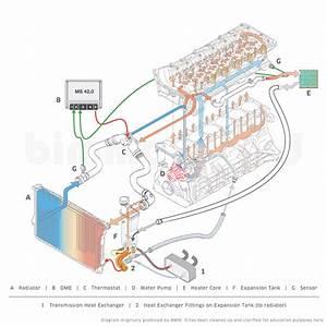 M50 Engine Diagram