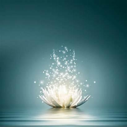 Spiritual Awakening Mind Conscious Flower Halt Come