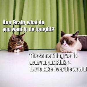 Pinky And The Brain Quote | Grumpy Cat | Know Your Meme