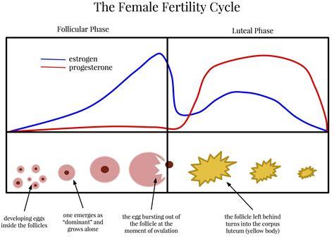Menstrual Cycle Hormones Glad Rags Version