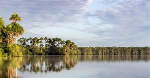 Gu U00eda Para Visitar La Reserva Nacional Tambopata