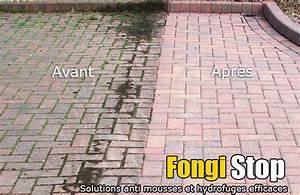 Anti Mousse Terrasse Bois : terrasse beton mousse ~ Melissatoandfro.com Idées de Décoration