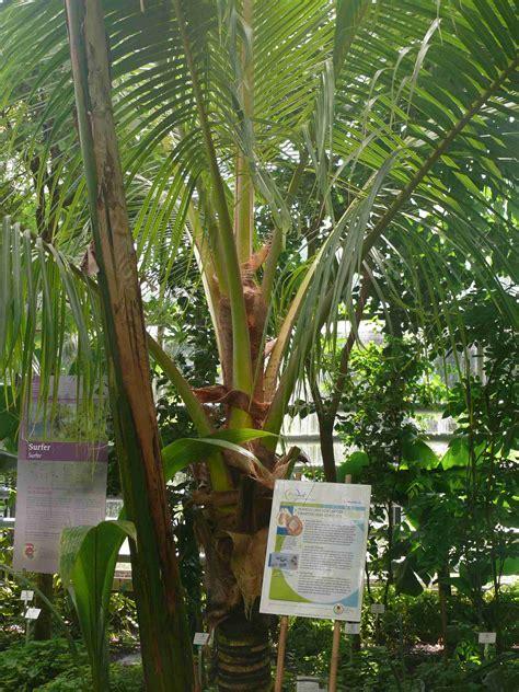 Botanischer Garten Uni Potsdam by Nutzpflanzenhaus Gew 228 Chsh 228 User Unser Garten