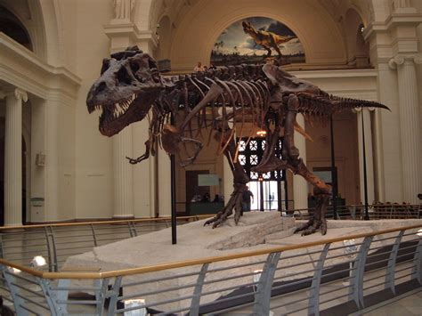 sue  rex  chicago field museum    identical
