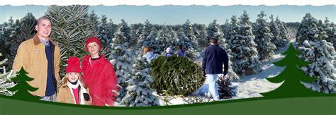 jarrettsville nurseries christmas tree farms