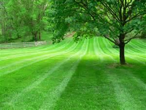 Cut Grass Lawn
