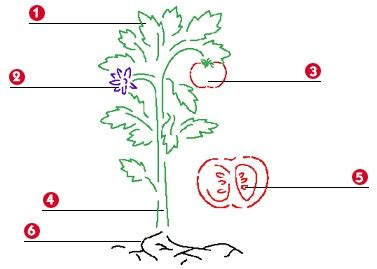 delovi biljke