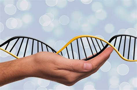 test genetica beneficios test 233 tico conoce tu 233 tica genyuss