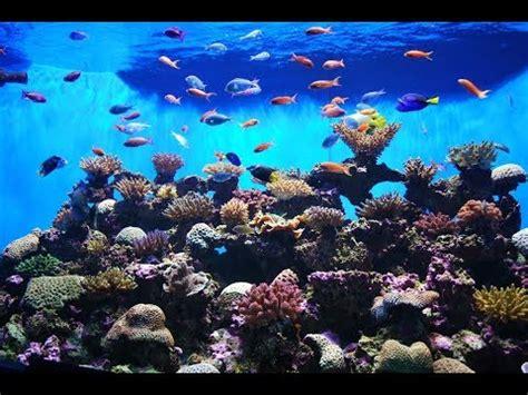 aquarium  wallpaper hd  aquarium game