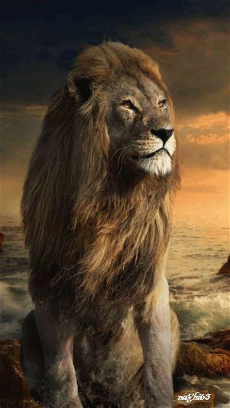 dreamiesde uhqzyowvaegif majestaetische tiere