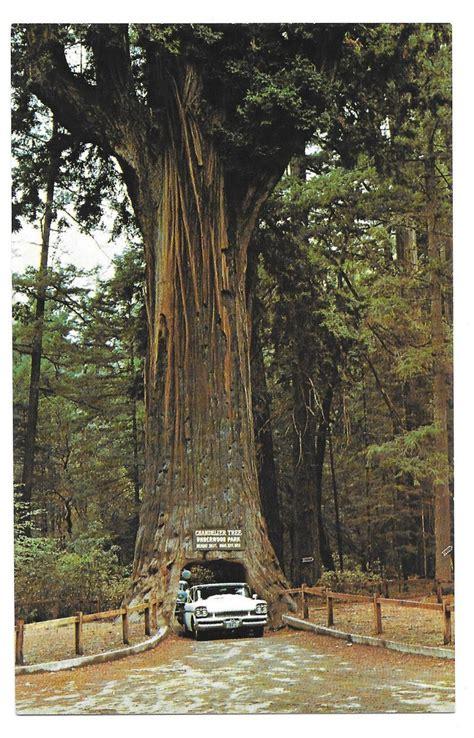 ca redwood chandelier drive thru tree leggett rte 1