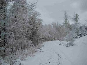 Where are all the Christmas Blizzard 2010 Snow Pics? (Five ...